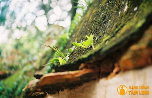 mái của bức tường đất đã phủ rêu xanh