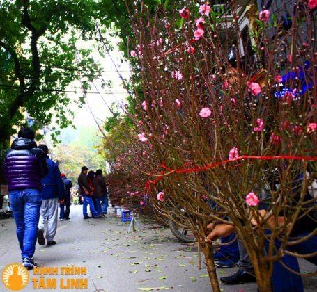 Chợ hoa ngày tết