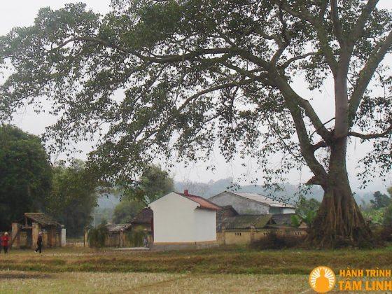 Gốc đa chùa Đà Quận
