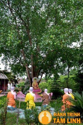Cây Bồ Đề chùa Cần Linh