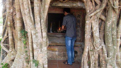 Miếu thờ trong lòng cây si