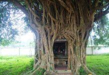 Ngôi miếu cổ trong lòng cây si