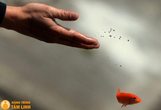Phong tục phóng sinh cá chép mang ý nghĩa tâm linh