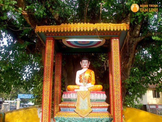 Tượng Phật Thích Ca bên gốc cây lâm vồ trên trăm năm tuổi trong khuôn viên chùa