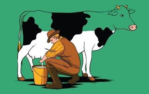 Bài học quý giá từ câu chuyện của con bò tội nghiệp
