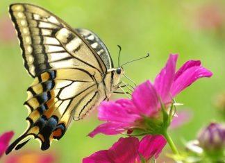 Con sâu bướm