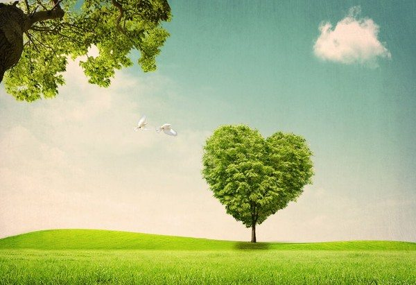 Nếu con người không có trái tim