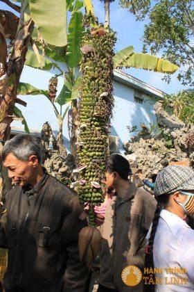 Cây chuối trăm nải sau phủ Tiên Hương
