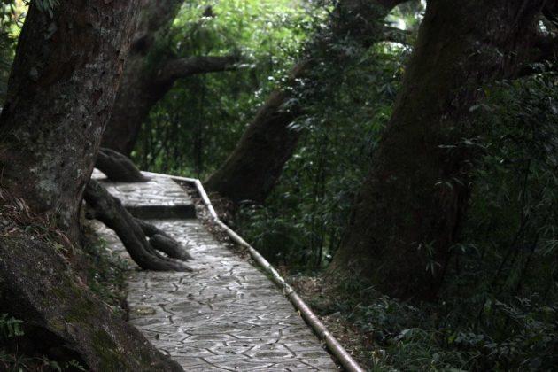 Đường Tùng ở Yên Tử
