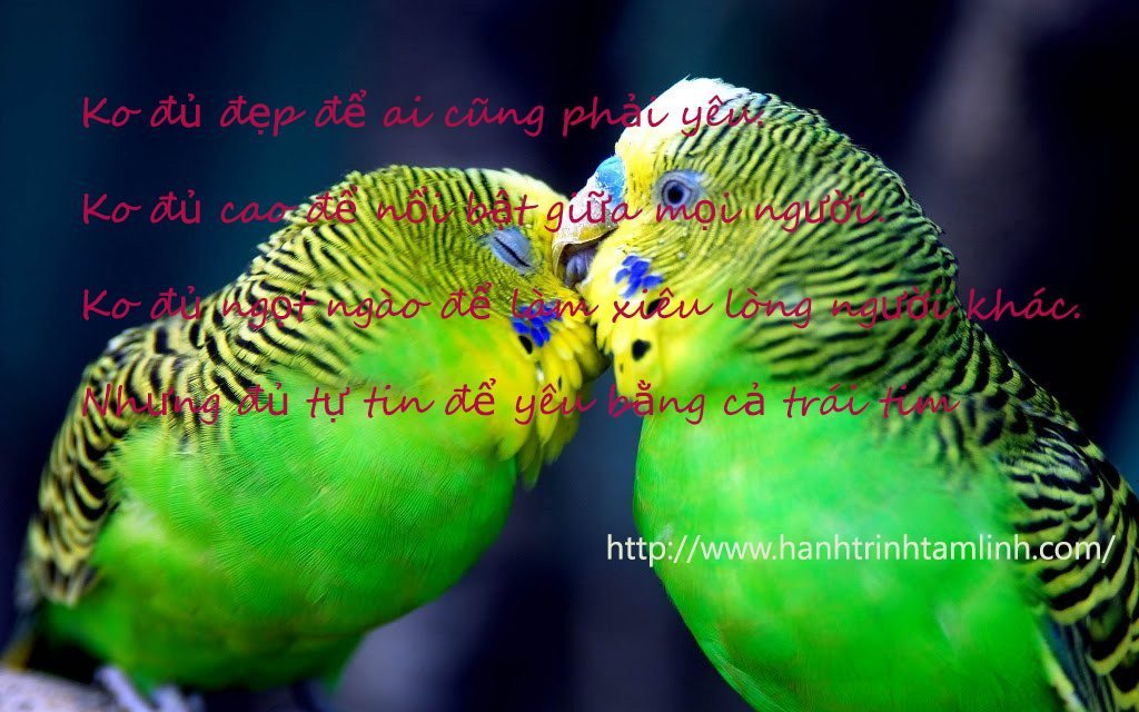 Những câu nói về tình yeu lãng mạn P3