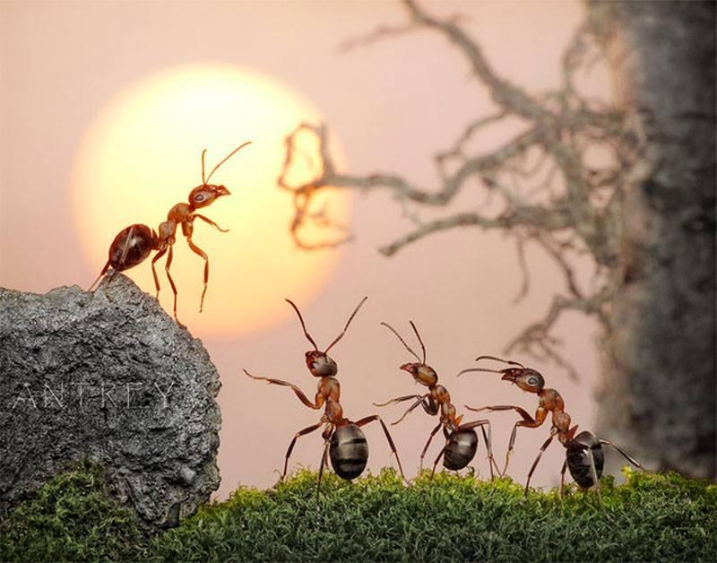 Đàn kiến