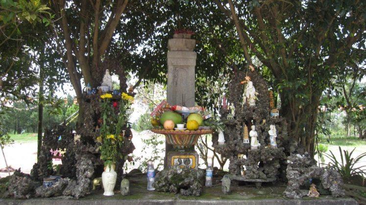 Cây hương đá chùa Ba Vàng